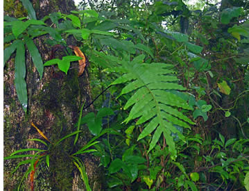 Nevelwoud botanische tour in Boquete, Panama