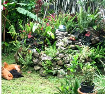 Trädgården på Finca Luz eko-gård i Boquete, Panama